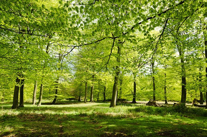 """England - English Summer Woods"" courtesy of Jacopo Werther via Creative Commons: http://bit.ly/1qRZ81t"
